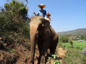 Ekkehard-B. beim Elefantenreiten