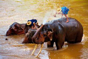 Elefanten Sanctuary